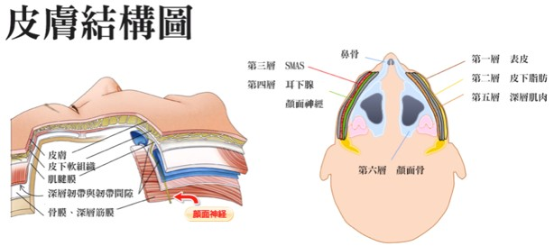 3~6個月會有皮膚緊實拉提的輔助效果
